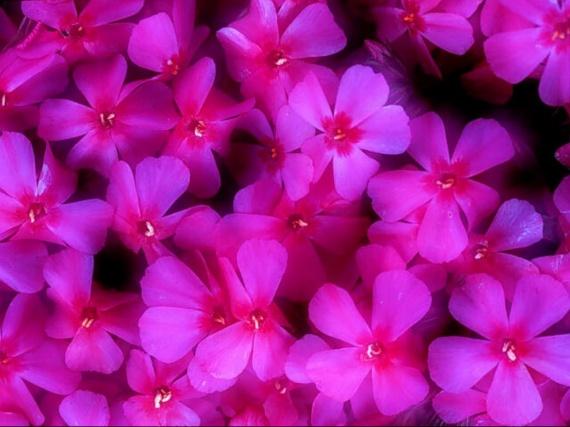 floral (16)