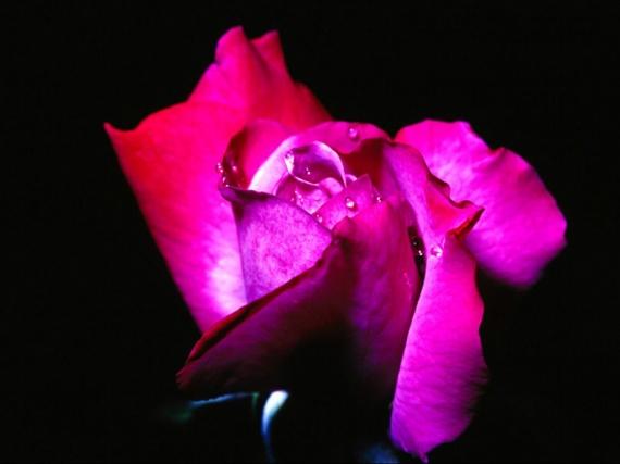 floral (17)