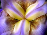 floral (19)