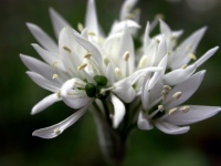 floral (21)
