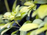 floral (27)