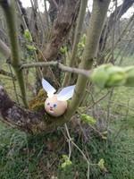 COCO  déguisé en lapin