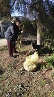 NANETTE  qui ramasse les pommes de pins