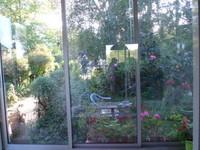 """Vue  de ma place  à la table du salon, sur le jardin côté  """"devant"""""""