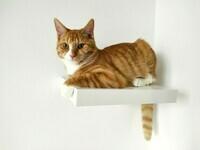 Etagère à chat 2