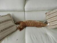 Etagère à chat3