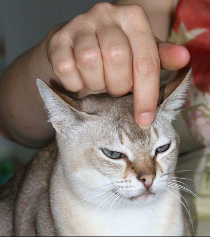Ticky de face caresse sur le nez Manu 4.jpg1.