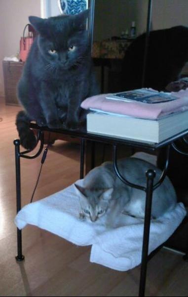Havanne et Brum sur table Tel 2