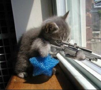 IM-261761-chat-fusil