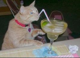 chat-drink
