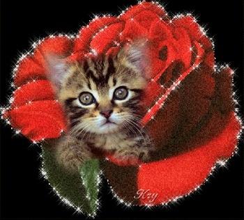 317053_546699165_chat-et-fleur-roseghyuji_H092704_L