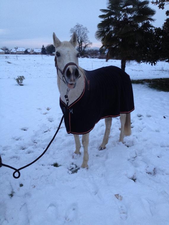 Le chameau des neiges