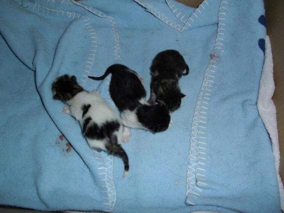 3 petites crottes