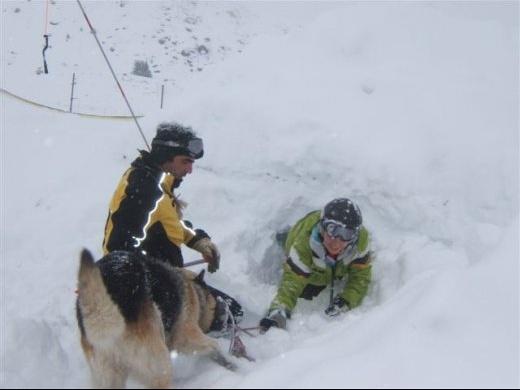 chien avalanche