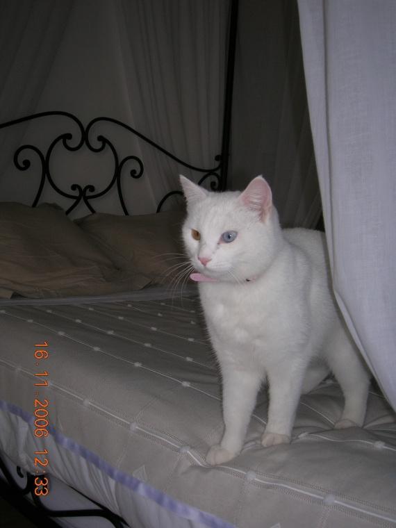 curieuse 2006
