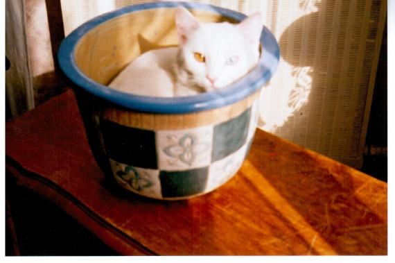 Perle dans le pot 03 2004