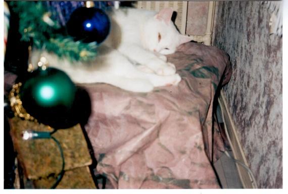 Perle Noël 2003