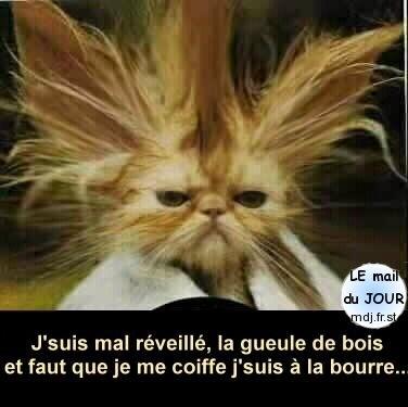 chat_gueule_de_bois