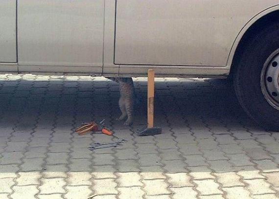 chat garagiste
