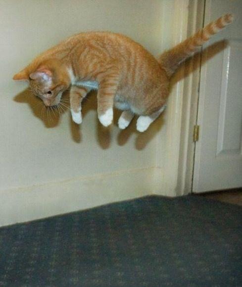 chat+en+levitation