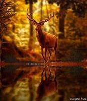 faune (4)