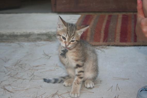 Kitty 2