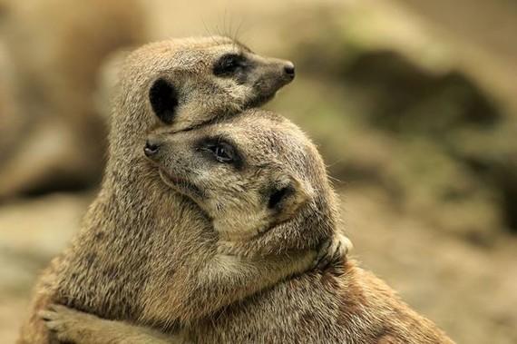 cute-animals