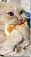 Adorable-Funny-Cats-2