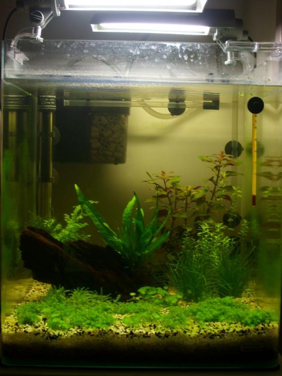 mon aquarium 1