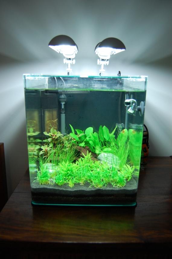 mon aquarium 2