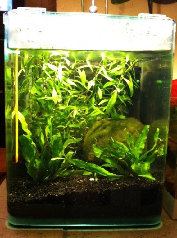 mon aquarium 3