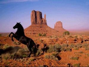 chevals-5-peq