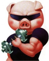cochon muscu