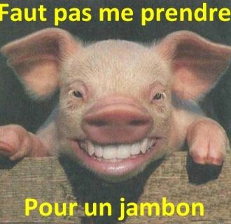 divers3-porc-img