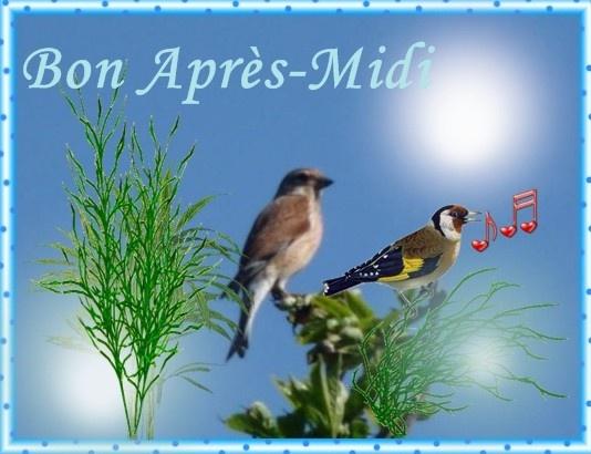 """Résultat de recherche d'images pour """"bon apres midi soleil"""""""
