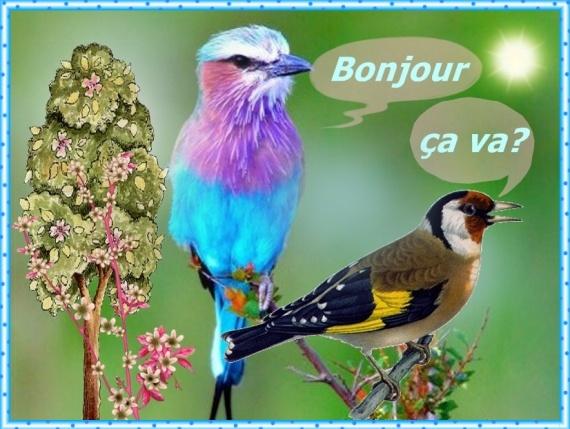 mercredi 19 mars Juste-bonjour-ca-oiseaux-img