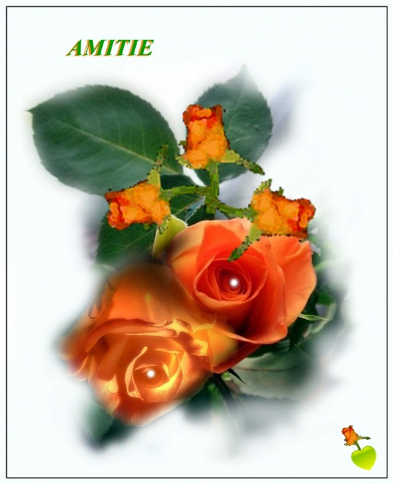 AMITIE ROSE ORANGE