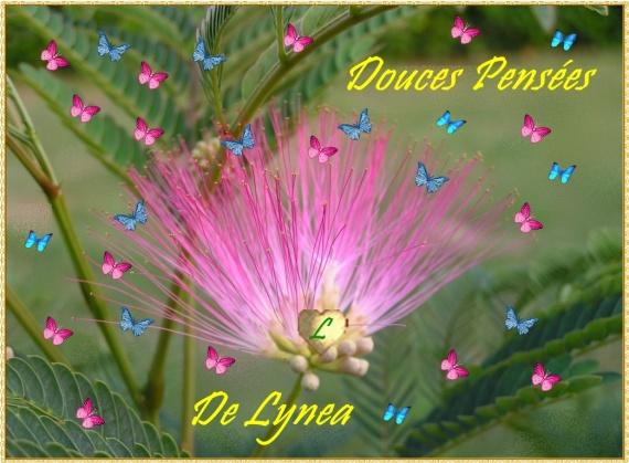 COEUR DE LYNEA