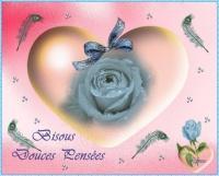 DOUCES PENSEES BISOUS ROSE BLEUE