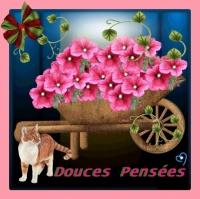 DOUCES PENSEES BROUETTE FLEURIE