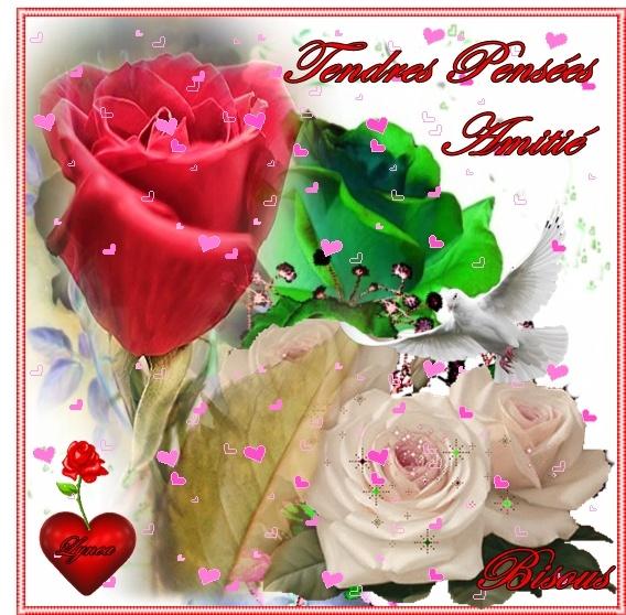 tendres pensées-amitié-bisous roses