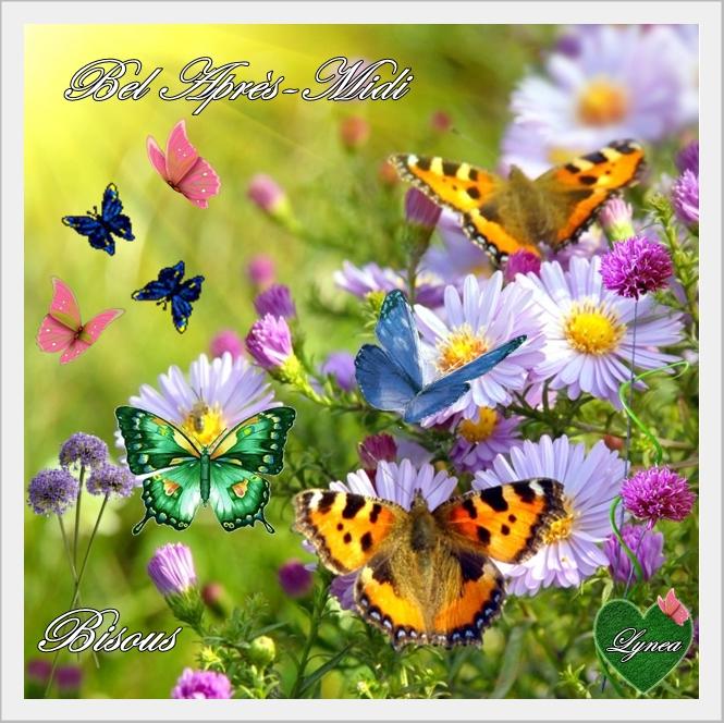 Bon apr s midi fleurs papillons bon apres midi matin - Image papillon et fleur ...