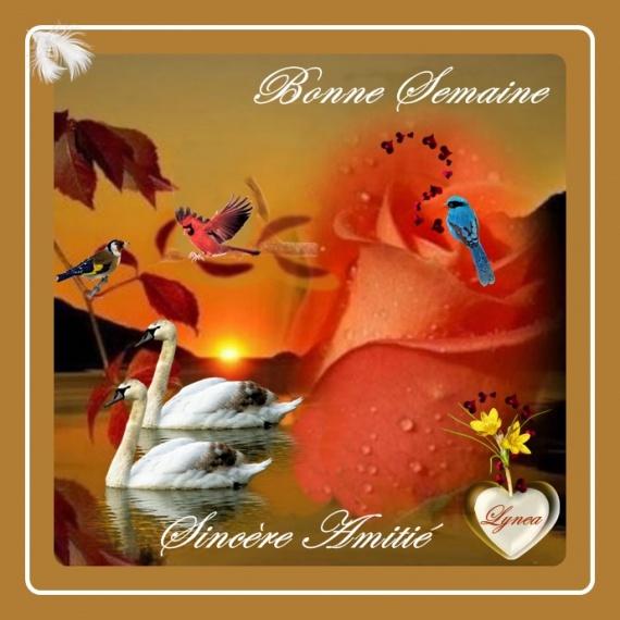 bonne semaine sincère amitié signes - BONNE SEMAINE - lynea18 - Photos -  Club Doctissimo