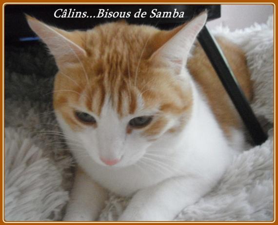 samba câlins bisous