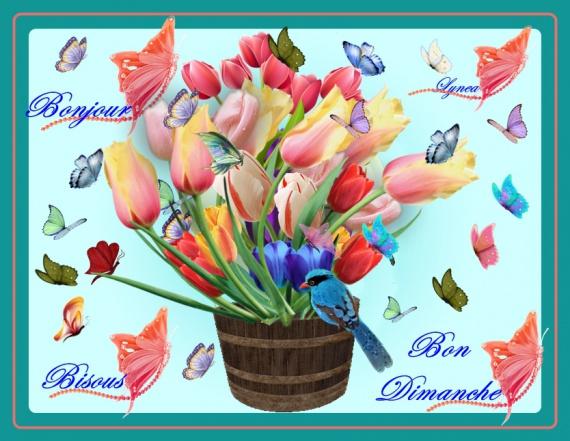 Bon Dimanche Bonjour Bisous Lynea Tulipes Et Papillons Bon