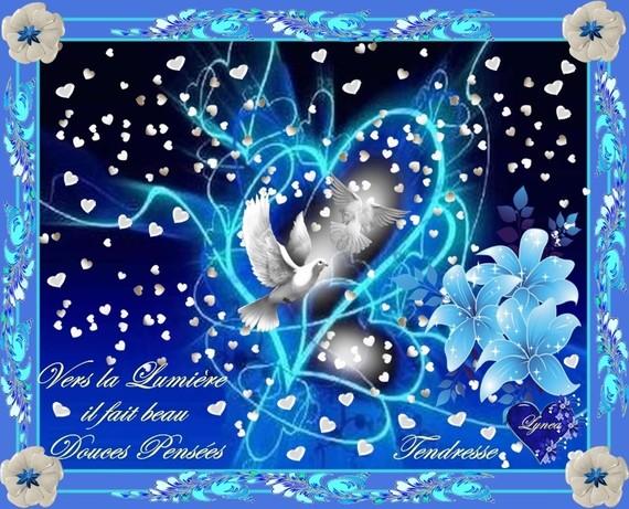 douces pensées-vers la lumière il fait beau-tendresse-colombes de lynea