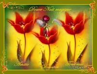 douce nuit magique les tulipe et la fée de lynea