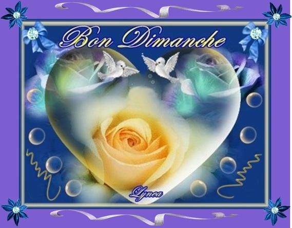 BON DIMANCHE ROSES-lynea