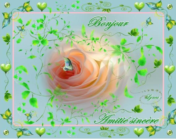 bonjour-amitié sincère rose de lynea