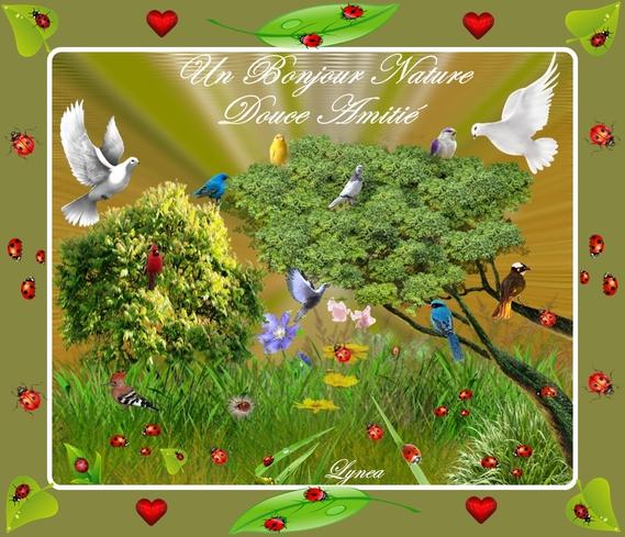 un bonjour nature-douce amitié-oiseaux-coccinelles-lynea